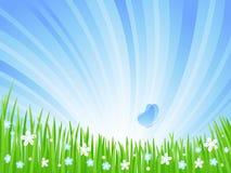 Frühlings-Wiese. Stockbilder