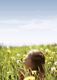 Frühlings-Wiese #36 Stockfotos