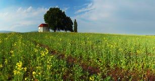 Frühlings-Wiese mit blauem Himmel und Wolken. Lizenzfreies Stockbild