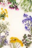 Frühlings-wilde Blumen-Grenze Stockbild
