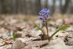 Frühlings-Zeichen Stockfotos