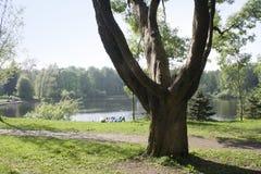 Frühlings-Zeit im Park Stockbilder