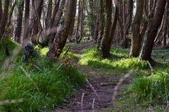 Frühlings-Zeit, Iren Forest Path Lizenzfreies Stockbild