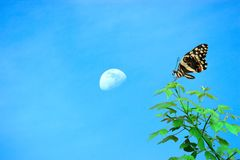 Frühlings-Zeit-Konzept, schöner Schmetterling, Mond und leerer Bereich für den Text stockbild