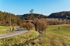 Frühlingsabend auf Weiden Die Straße um Weiden mit Vieh Landschaft in der Tschechischen Republik Viehbestand auf dem Bauernhof Lizenzfreies Stockfoto