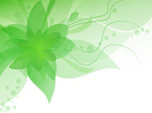 Frühlingsabstrakter Blumenhintergrund Lizenzfreies Stockbild