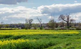 Frühlingsackerland in der Essex-Landschaft Lizenzfreies Stockfoto