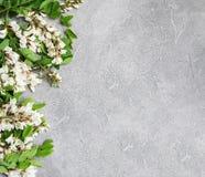 Frühlingsakazienblumen Stockbild