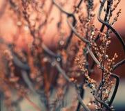 Frühlingsanlagen Stockfoto