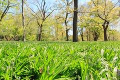Frühlingsansicht in botanischen Garten Brooklyns Lizenzfreie Stockfotos