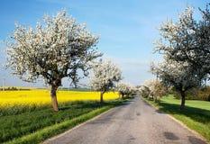Frühlingsansicht der Straße mit Gasse des Apfelbaums Stockfoto