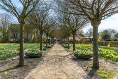 Frühlingsansicht Hollands im März 2018 einer langen Reihe der ruhigen bloßen Bäume, mit Feldern und Blumenkästen gelben und weiße stockbild