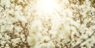FrühlingsApfelbäume und Blumen im hellen Sonnenlicht Stockfotografie
