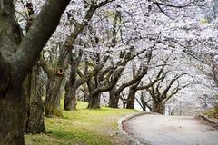 Frühlingsapfelobstgarten Stockfotografie