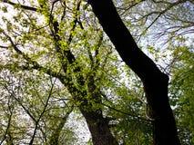 Frühlingsbäume Lizenzfreie Stockfotos