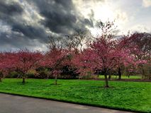 Frühlingsbäume lizenzfreies stockfoto
