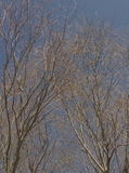 Frühlingsbäume Stockfotos