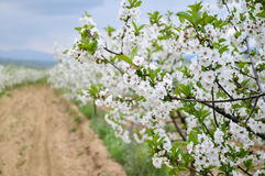 Frühlingsbäume, Abschluss oben Stockfoto