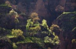 Frühlingsbäume in Gansu China Lizenzfreie Stockfotografie