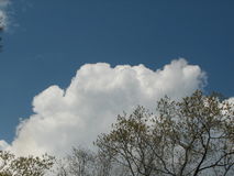 Frühlingsbäume mit clouds2 Lizenzfreie Stockfotografie