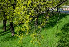 Frühlingsbäume mit neuem Grün verlässt im Park Stockfotos