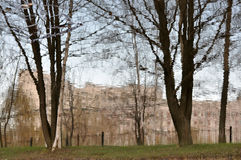 Frühlingsbäume ohne Blätter Stockfotografie