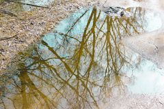 Frühlingsbäume reflektiert in einer Pfütze In einer Pfütze die Reflexion O Lizenzfreies Stockbild