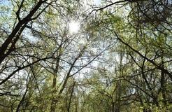 Frühlingsbäume und -sonne stockfotografie