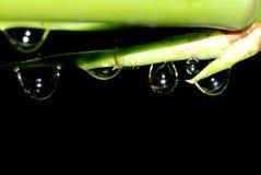 Frühlingsbambus waterdrop stockbilder