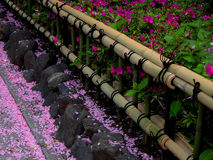Frühlingsbambuszaun stockfotografie