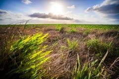 Frühlingsbauernhoffelder mit Sonnenuntergang und Wolken in Texas Stockbilder