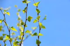 Frühlingsbaum Lizenzfreie Stockfotografie