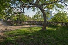 Frühlingsbaum in einer Wiese mit grünem Gras Lizenzfreies Stockfoto