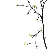 Frühlingsbaum mit Vögeln Lizenzfreies Stockfoto