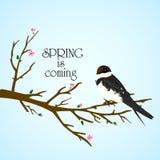 Frühlingsbaum mit Vogel auf ihm stock abbildung