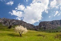 Frühlingsbaum unter den Bergen Stockfotografie