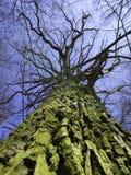 Frühlingsbaum von unterhalb Lizenzfreie Stockfotos
