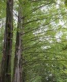 Frühlingsbaumaste mit Sonnenlicht Lizenzfreie Stockfotografie