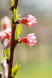Frühlingsbaumblume stockfotografie