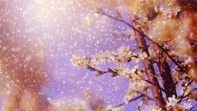 Frühlingsbaumblume im Regen Lizenzfreies Stockfoto