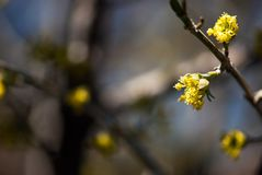 Frühlingsbaumblumen lizenzfreie stockfotografie