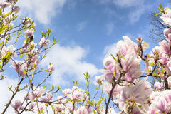 Frühlingsbaumblumen Stockfotos