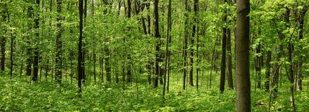 Frühlingsbaumlandschaft stockbild