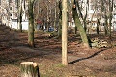 Frühlingsbeschneidung ein Baum in einem Stadtpark Stockbild