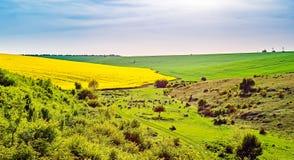 Frühlingsbild mit Rapssamenfeld Stockfotografie