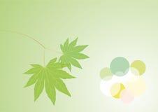 Frühlingsblätter Lizenzfreies Stockfoto