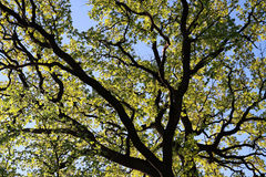 Frühlingsblätter auf einem Baum Stockfotografie