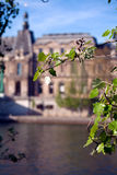 Frühlingsblätter und Luftschlitz-Palast, Paris, Frankreich lizenzfreie stockbilder