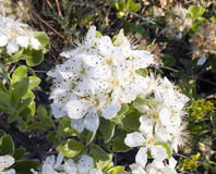 Frühlingsblühen Stockfotos