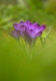 Frühlingsblühende pflanzen stockbilder